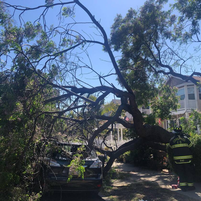 A tree fell on a car in Coronado and sent one person to a hospital Sunday afternoon.