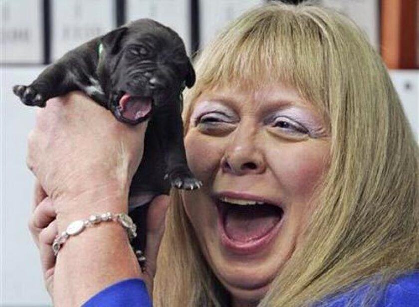 Bernann McKinney from the U.S. holds one of five cloned pitbull pupies during her first meeting with them at the Seoul National University Hospital for Animals in Seoul, South Korea, today.