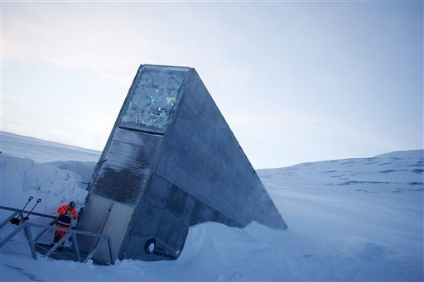 Syria Crops Sheltered In Arctic Doomsday Vault The San Diego