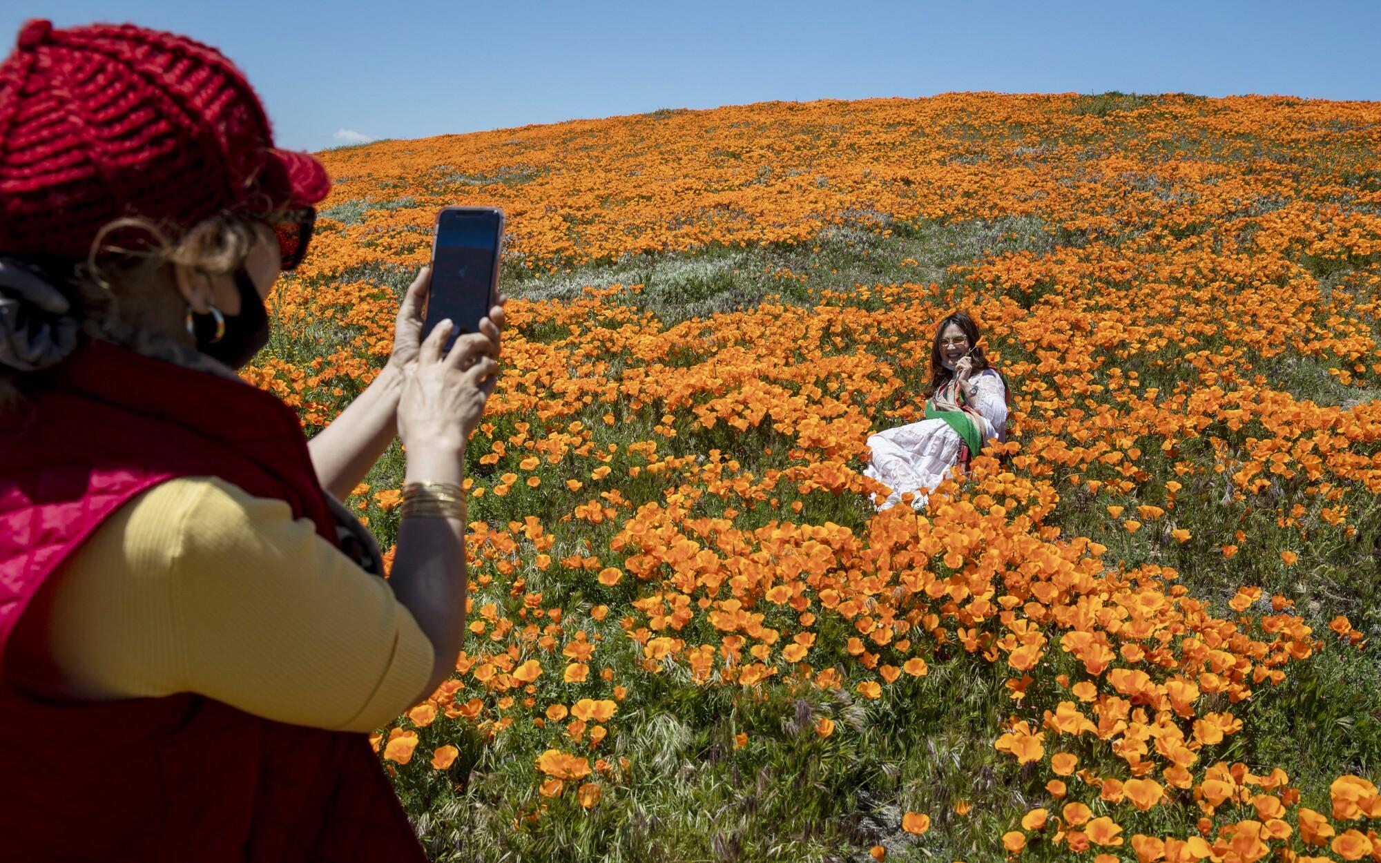 Coronavirus Pandemic Can T Shut Down California Poppy Bloom Los