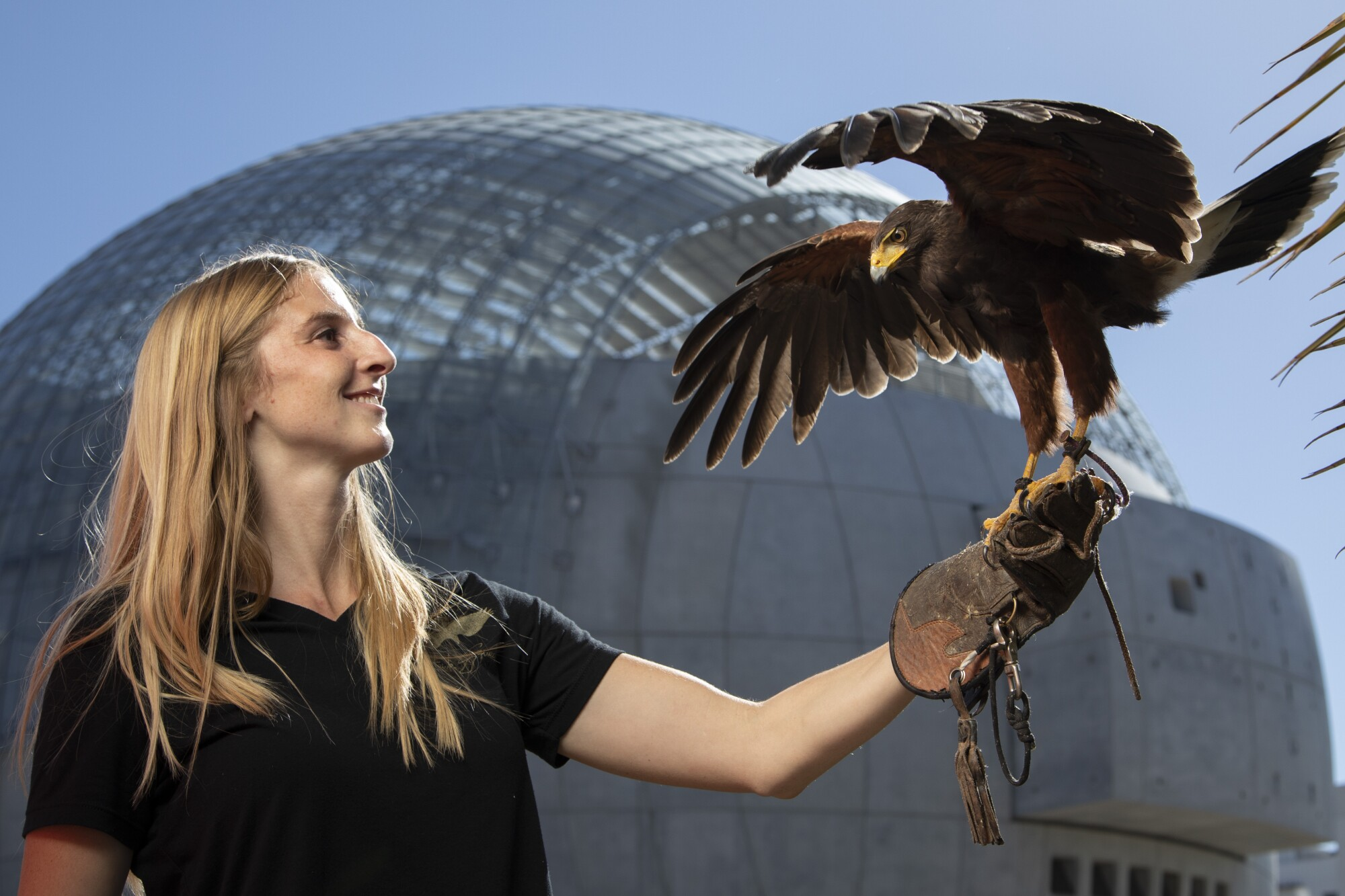 A woman looks at a hawk sitting on her gloved wrist.