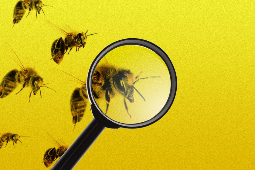 Bees seen through a magnifying glass