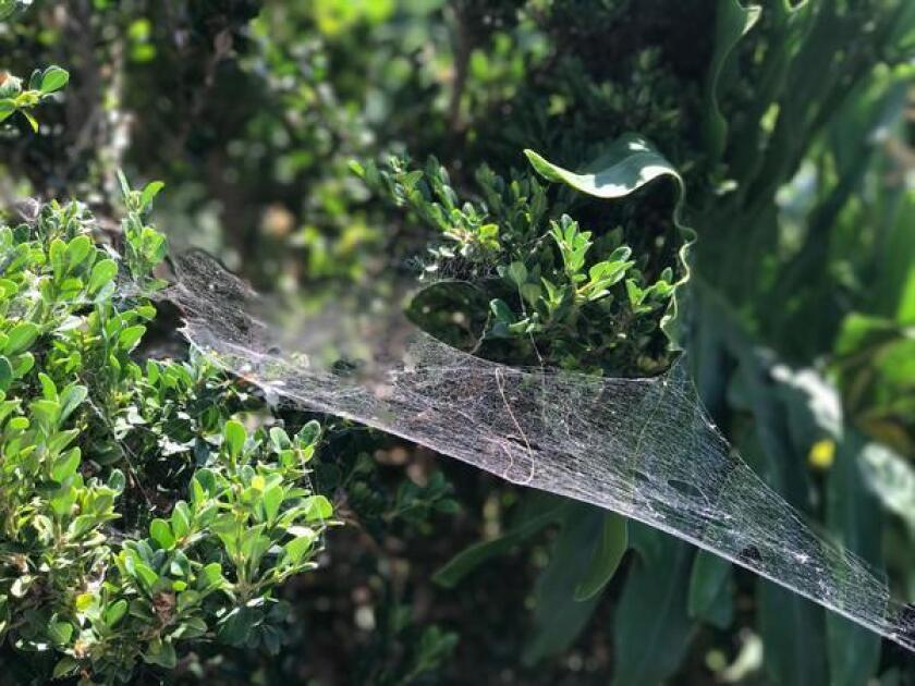 My husband considers spiders to be fellow engineers. — Inga