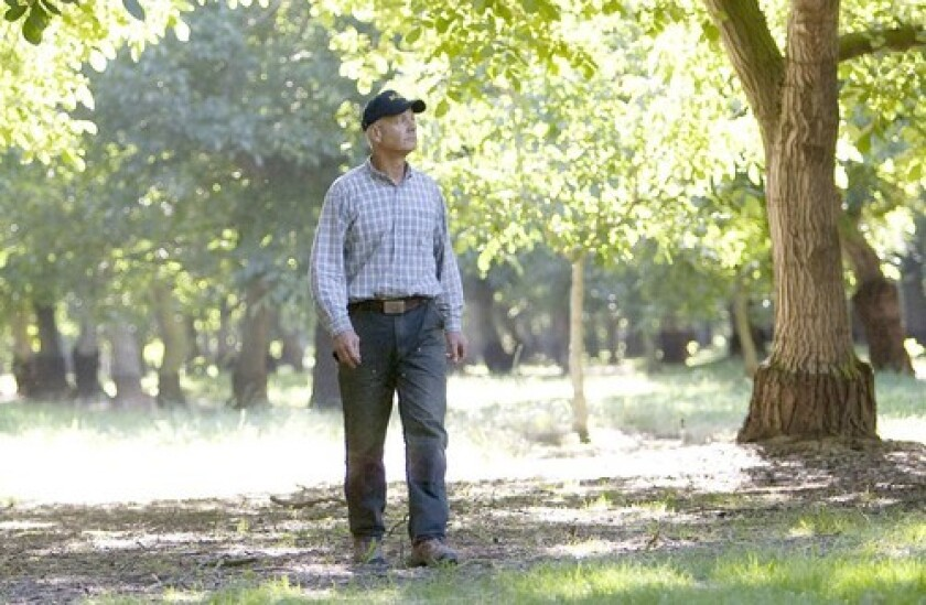 San Joaquin Valley walnut farmer Chris Locke has noticed a change in the weather, with less frigid fog and more sunny days. Winter chilling hours have declined as much as 30% since 1950 in large swaths of the Central Valley, according to a UC Davis study.