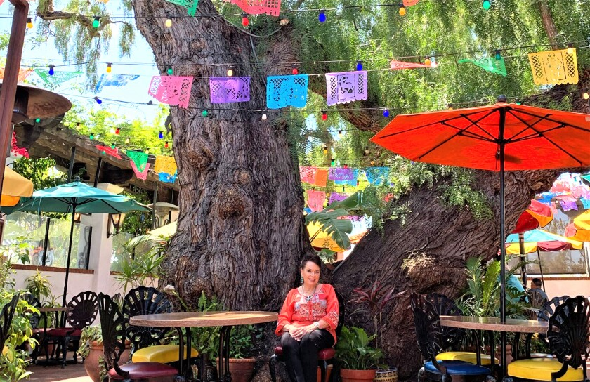 This giant pepper tree was saved 26 years ago by Diane Powers. She bought the cafe next door to save it.