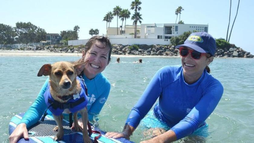Your pup can learn how to surf like the pros this weekend! The classes are taught by the SoCal Surf Dogs, which originally started to prep pooches for the annual Surf Dog Surf-A-Thon. Each lesson will begin with 20 minutes on land, familiarizing all with the surf and the sand. Next up, the dog and owner will be paired with a SoCal Surf Dog instructor for 30 minutes of riding waves. Read more here. 8:30 a.m to noon. Sunday. Del Mar Dog Beach, 3200 Camino Del Mar, Del Mar. $45 with a 20% discount offered off any additional lessons and include the required canine life-vests and surf or paddle boards. animalcenter.org (/ Helen Woodward Animal Center)