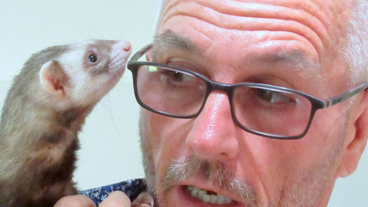 He's fighting to make ferrets legal in California - The San Diego