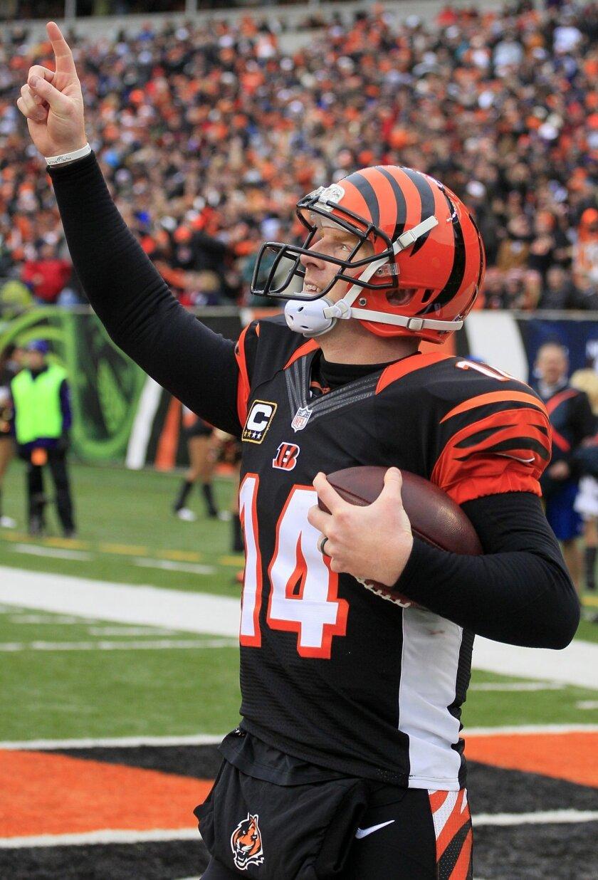 Cincinnati Bengals quarterback Andy Dalton celebrates after scoring on a 1-yard touchdown run in the second half of an NFL football game  against the Baltimore Ravens, Sunday, Dec. 29, 2013, in Cincinnati. (AP Photo/Tom Uhlman)