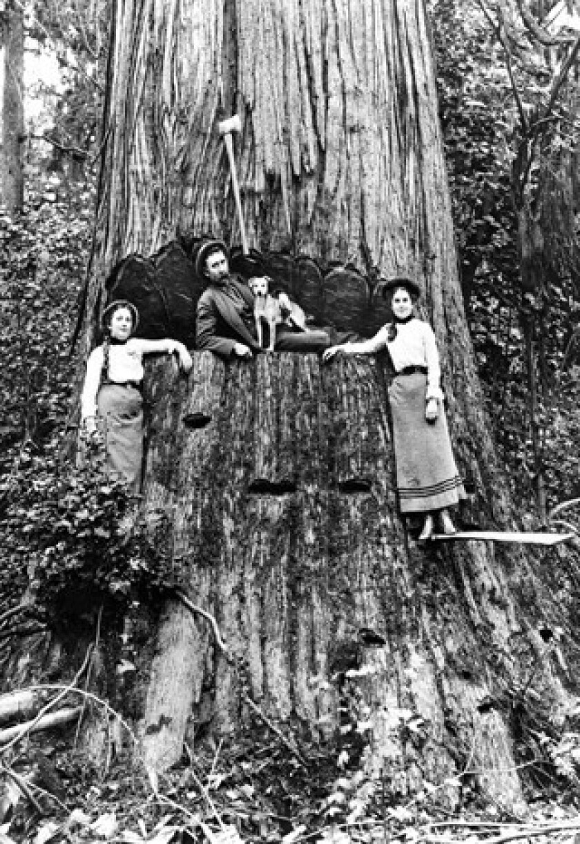 Trees and logging place in U.S. history are explored in 'American Canopy.'