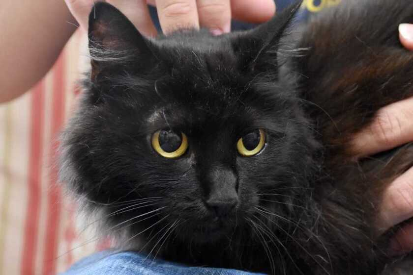 Pet of the week is Clover, a three-legged kitty looking for a lap to sit on.