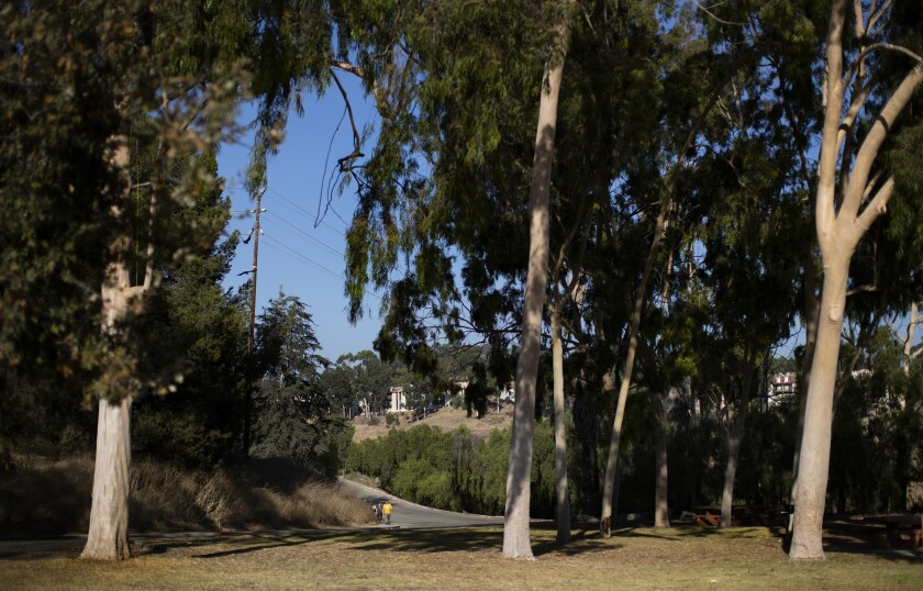 Large eucalyptus trees provide shade in the picnic area at Debs Park.