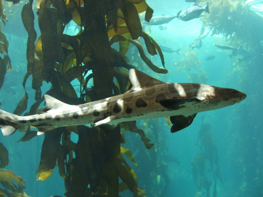 Snorkel with the Sharks 8-10 a.m. July 11, 25-26; Aug. 8, 16, 22; Sept. 19-20.