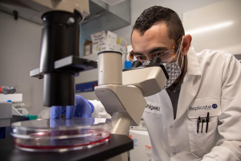 Replicate Bioscience scientific director Shigeki Miyake-Stoner visually inspects cells.