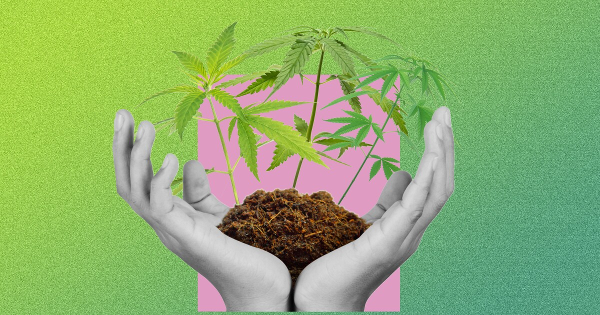 Growing my first pot plant was easy — until it was time to smoke it