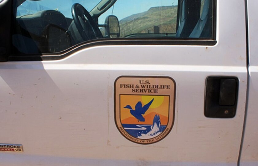 This Monday, June 2, 2014 photo provided by U.S. Customs and Border Protection shows detail of a decal on a truck made to look as if it belonged to the U.S. Fish and Wildlife Service, but which was actually carrying more than 3,200 pounds of marijuana, east of Douglas, Ariz. Agents found the truck with the federal agency's decals along the border with Mexico. The driver and a passenger fled from the truck into Mexico after being pulled over by border agents. Agents then discovered that the truck, which had fake decals, was filled with $1.6 million worth of marijuana. (AP Photo/U.S. Customs and Border Patrol)