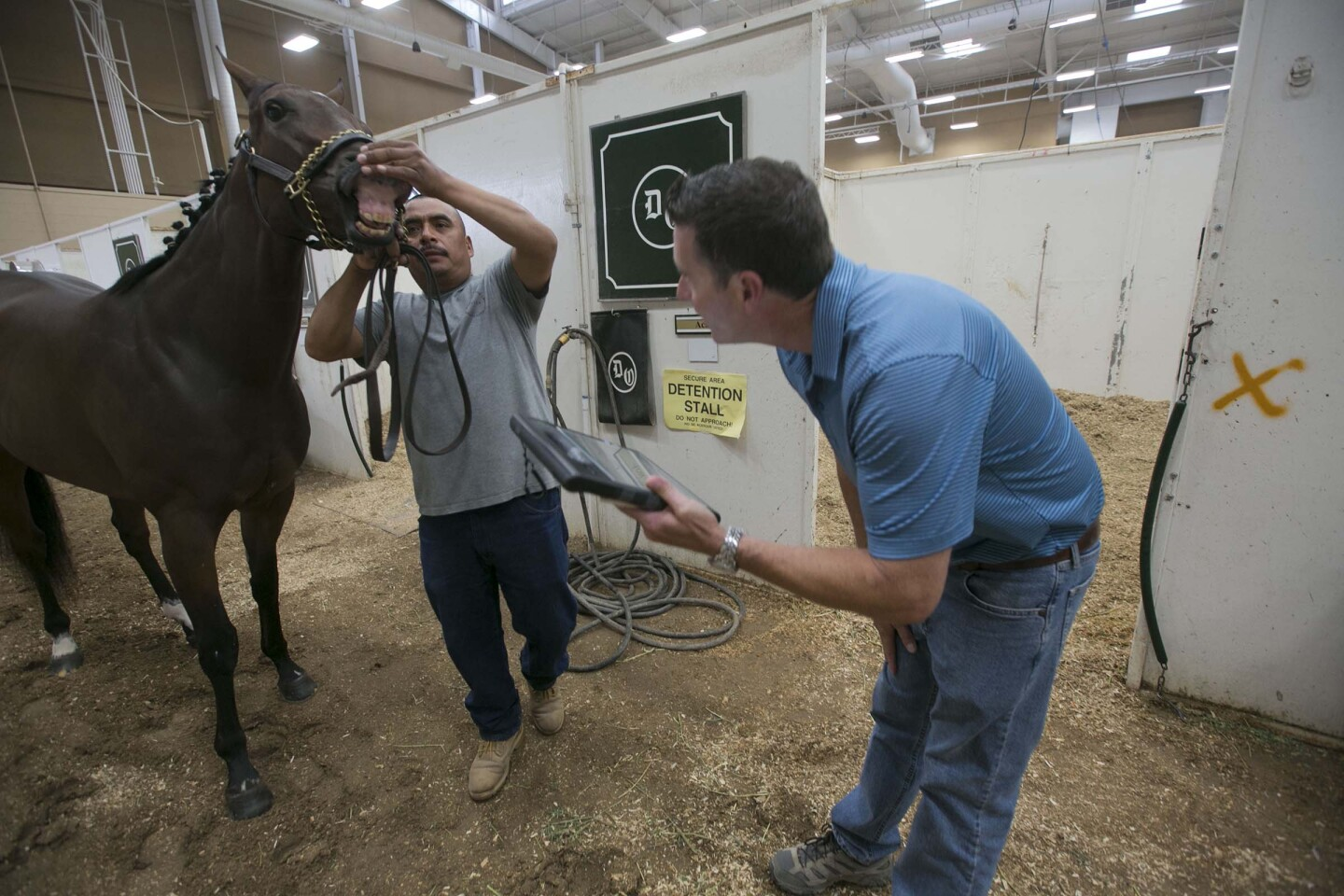 Dr. Dana Stead, one of the Del Mar thoroughbred club's veterinarians, says his job is to be an advocate for the horses at the racetrack. On Wednesday July 31st, Dr. Stead checked half of the days field while Dr. William Farmer checked the other half. Here Dr. Stead is verifying the lip tattoo of one of the day's entries.