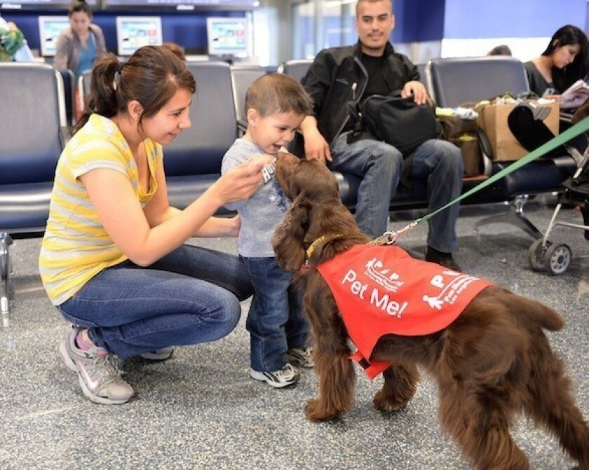 Want to relax before your next LAX flight? Cuddle up with a dog