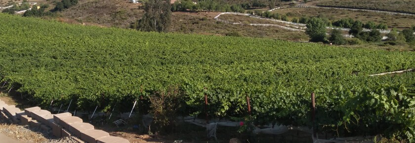 Delfina Vineyard proposes to clear brush to make way for grapevines and olive trees off SR-78.