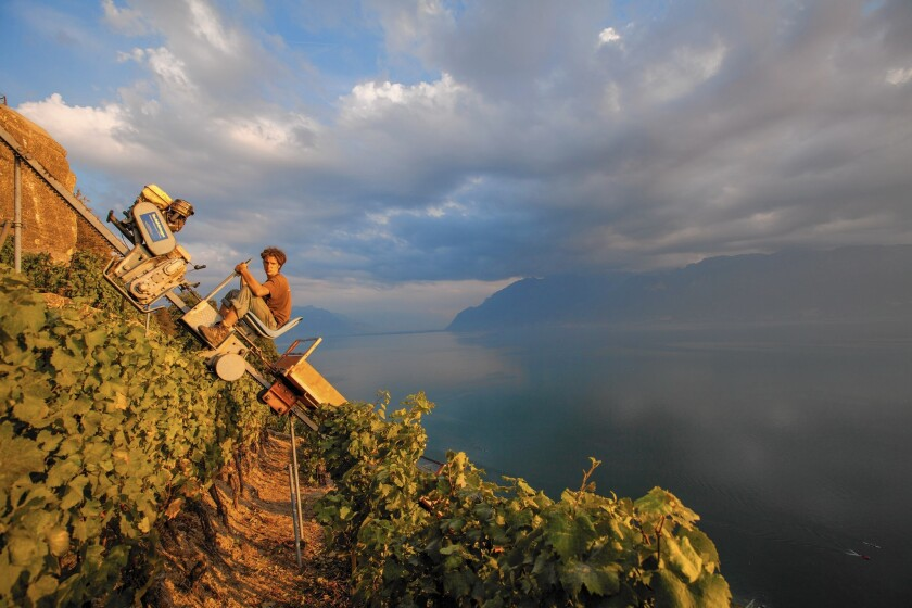 A man drives a load of wine grapes up a steep hillside using a monorail system.