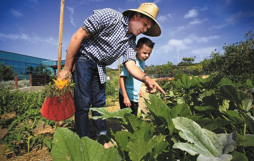 Chef-owner Brian Malarkey and his 7-year-old son, Hunter, work in the organic garden located adjacent to one of Malarkey's Green Acre organic restaurants.
