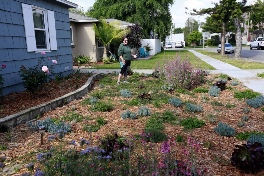 Denise Hurst of Long Beach shows the drought-tolerant garden she planted with the help of a city program that offers rebates of $3.50 per square foot for residents who tear up their water-guzzling lawns and plant drought-resistant plants. Board members of the Metropolitan Water District of Southern California voted Tuesday to add $350 million to the district's lawn-removal rebate program.