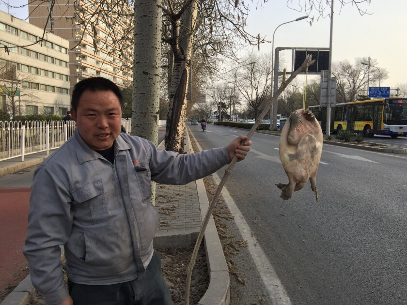 Turtle Man, and the live soft-shelled turtle he was trying to sell, was a novelty along Beijing's Second Ring Road.