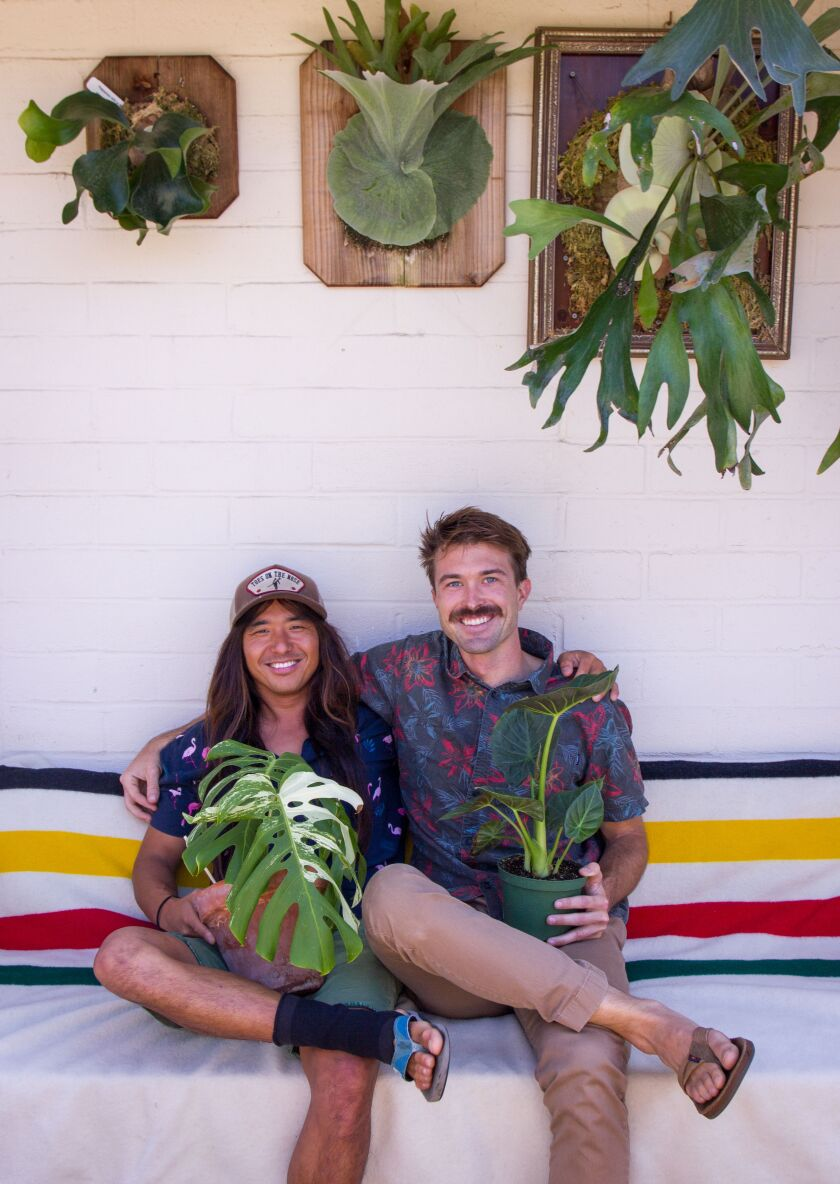 Brian Feretic and Nick Mitchell of Ocean Beach founded Blossm, a plant swap application that connects fans of horticulture.
