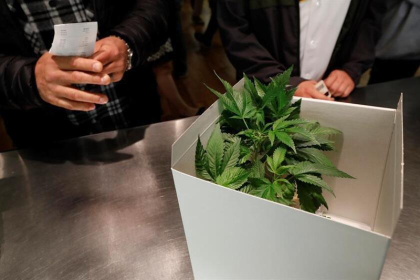 Un cliente compra una planta de marihuana. EFE/Archivo