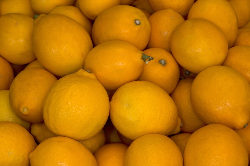 Lemons grown by Polito Family Farms in Valley Center are popular at farmers markets throughout Southern California.
