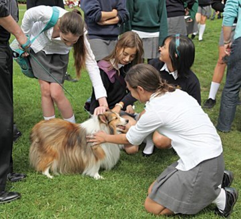 Girls gather around Dr. Moseley's collie. Photos BRITTANY COMUNALE