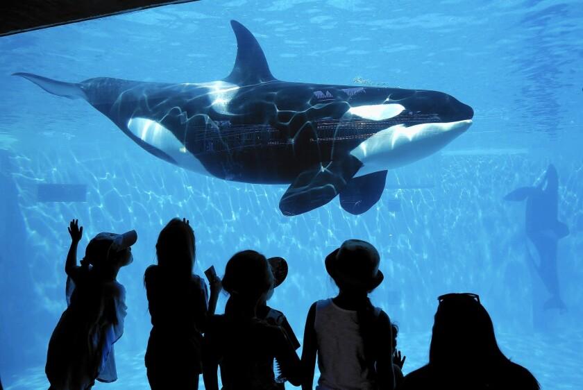 SeaWorld San Diego to add attraction