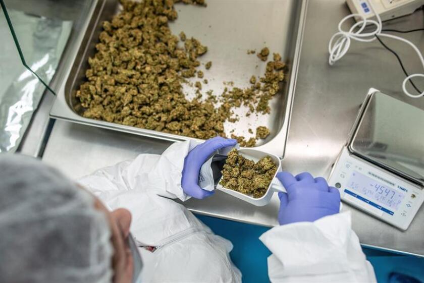 Un trabajador empaqueta marihuana medicinal en un invernadero de la compañía BOL Pharma en Lod, Israel, el 23 de enero de 2018. EFE/Archivo