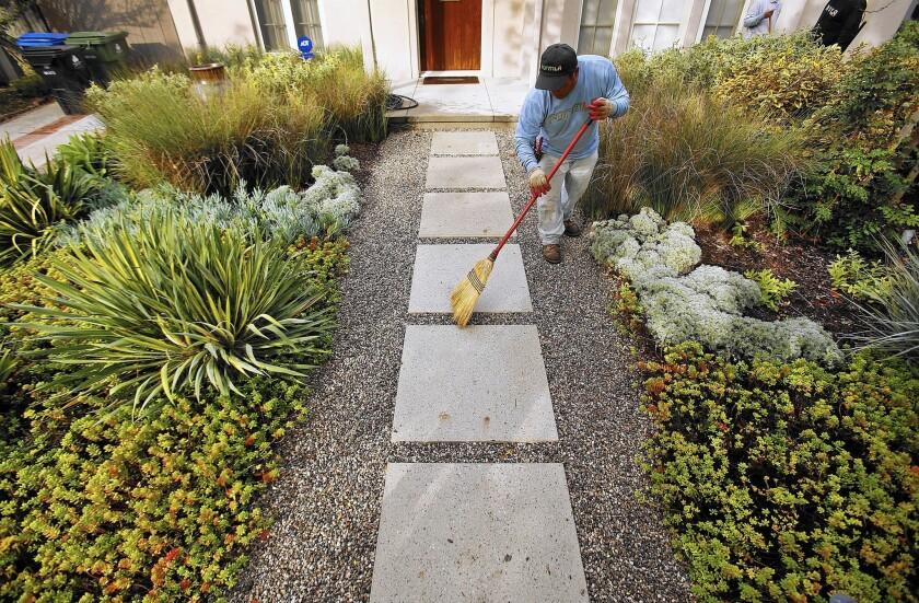Elias Hernandez sweeps plantings