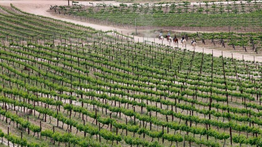 Horseback riders ride through the vineyards at Avensole Vineyard and Winery in the Temecula Valley.