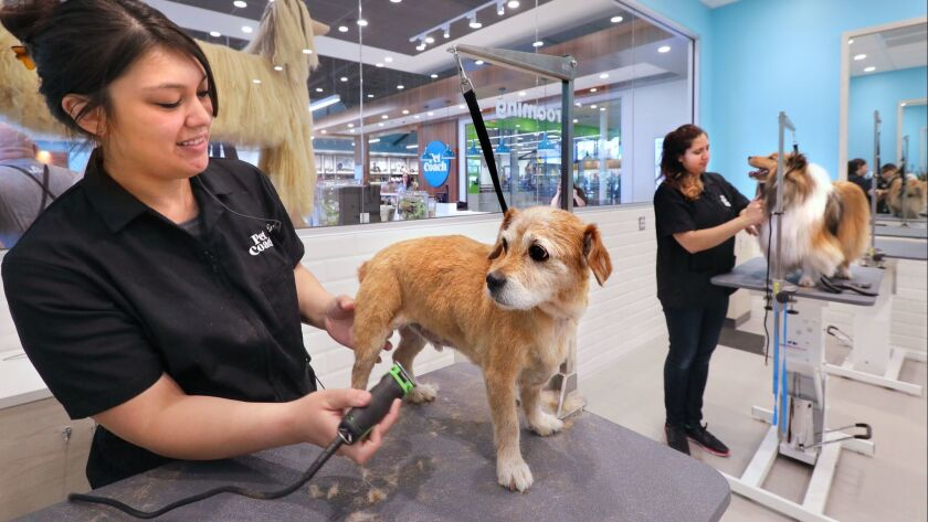 Sprocket gets groomed by Nicole Pierce, at left, while Lucille gets groomed by Crystal Brown, at right, in the Grooming Salon of the new Petcoach store.