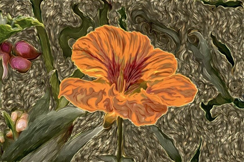 'Nasturium' by John Valois is on display at La Jolla Community Center.