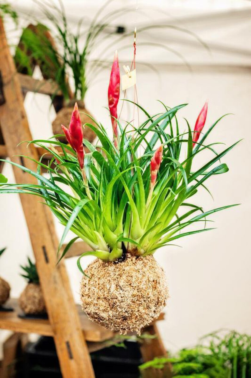 The 13 classes and three workshops will include a talk from Andy Cuffel of Cuffel Farms, on air plants.