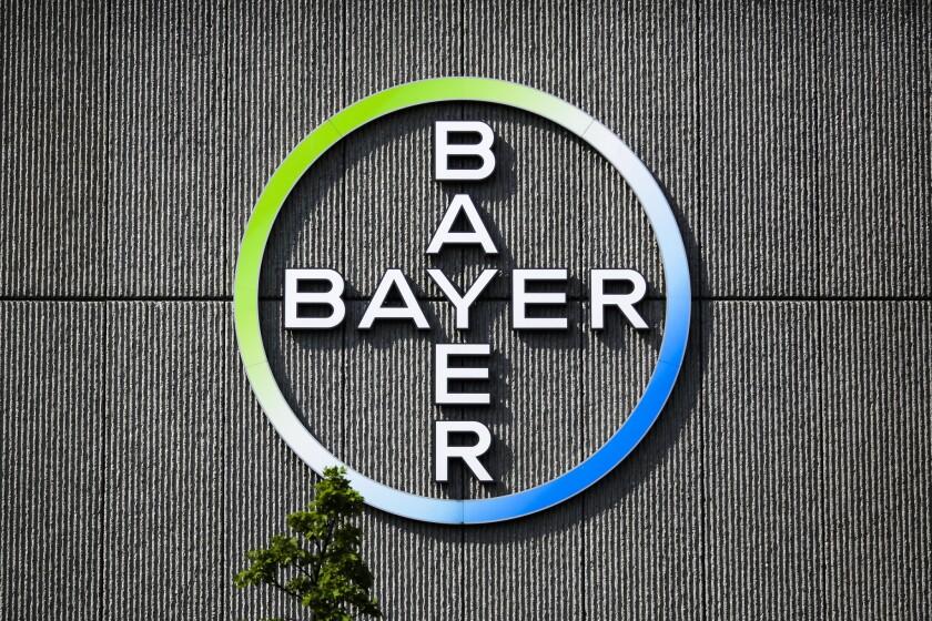 Bayer AG acordó la adquisición de la empresa de semillas y pesticidas Monsanto. AFP PHOTO / Patrik STOLLARZ AND John THYSPATRIK