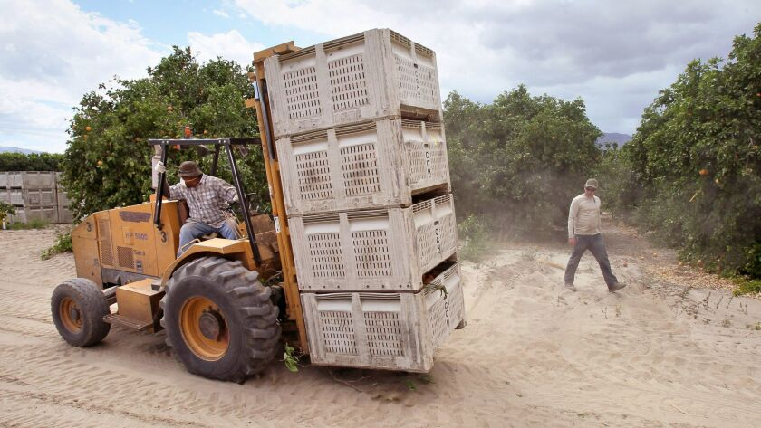 A worker at Seley Ranches in the north Borrego Valley moves containers of just picked organic grapefruit.