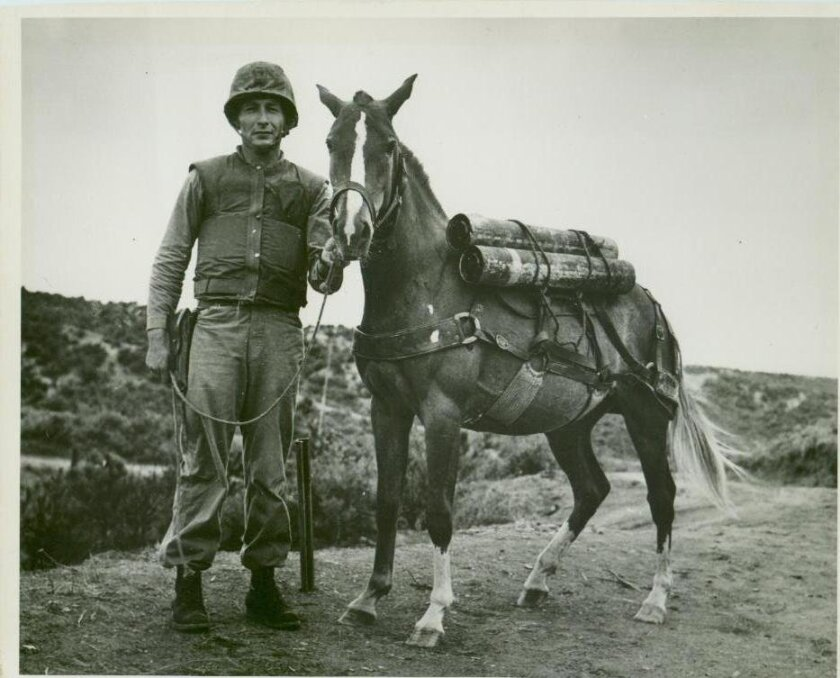 Reckless with Tech. Sgt. Joe Latham in Korea in 1953. Photo courtesy of Nancy Latham Parkin.