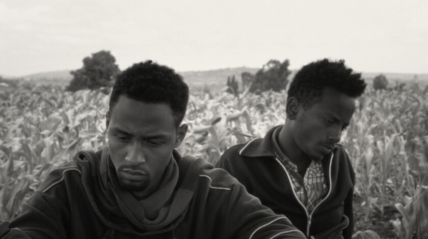 """Two young men in a field in the documentary """"Faya Dayi."""""""