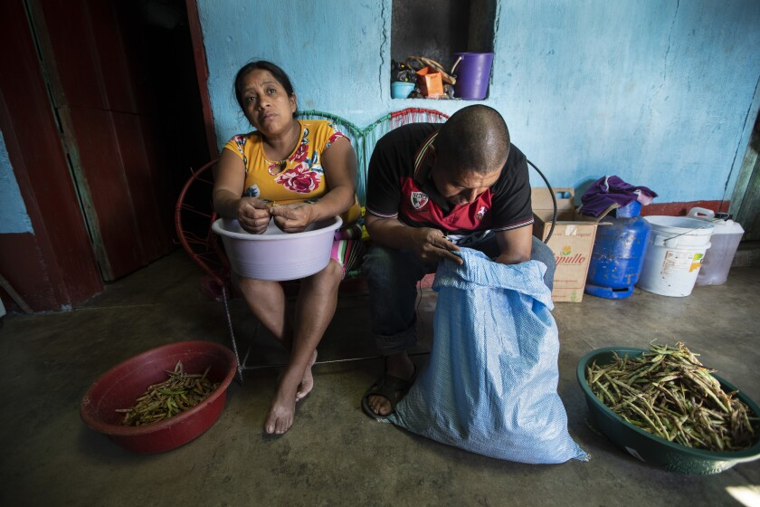 Alvina Jeronimo Perez and her husband Anibal Garcia peel beans that they grew themselves to cook an early lunch at their home in Tizamarte, Guatemala, Wednesday, Dec. 9, 2020. Jerónimo made a failed attempt to migrate last year to the U.S. in part to pay off a loan for the addition to their single-story concrete block house, which Anibal built on land passed down from her great grandparents. (AP Photo/Moises Castillo)