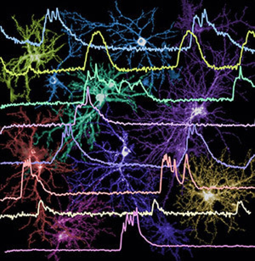 Scientists funded by the NIH BRAIN Initiative will develop tools to simultaneously watch the unique firing patterns of many neurons in hope of classifying them based on physical characteristics, such as size and shape, and functional characteristics, such as patterns of electrical activity.