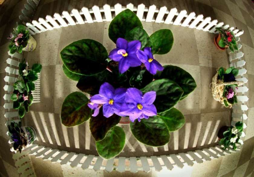 New research pinpointed the exact mutation that allows you to smell violets. The genetic basis for smelling malt, apples and blue cheese was also discovered.