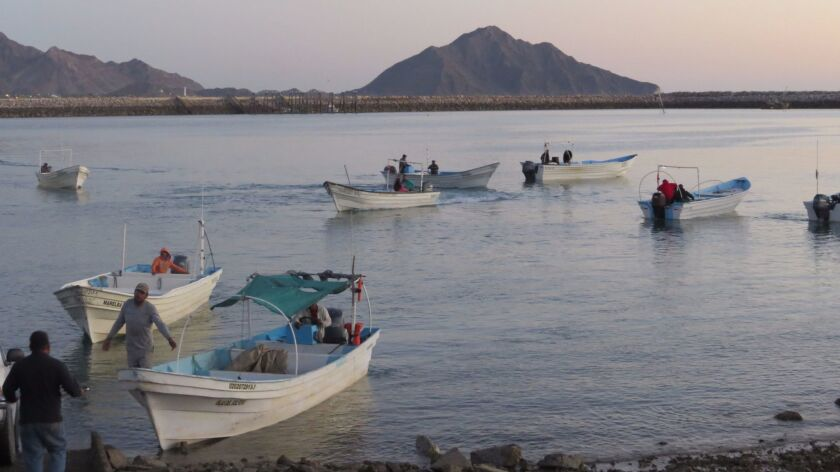 A group of fishermen collaborating with vaquita rescue efforts set off early Saturday to locate ille