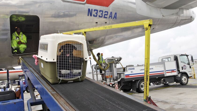 American Airlines grounds crew unload a dog from the cargo area of an arriving flight at JFK International airport in New York in 2012. An airline trade group has created a program that certifies airlines meet standards for transporting animals.