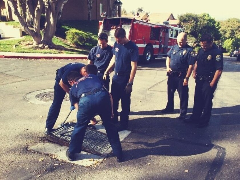 Firemen and police recently responded to a call to save a duckling that had fallen through this storm sewer grate in Rancho Bernardo.
