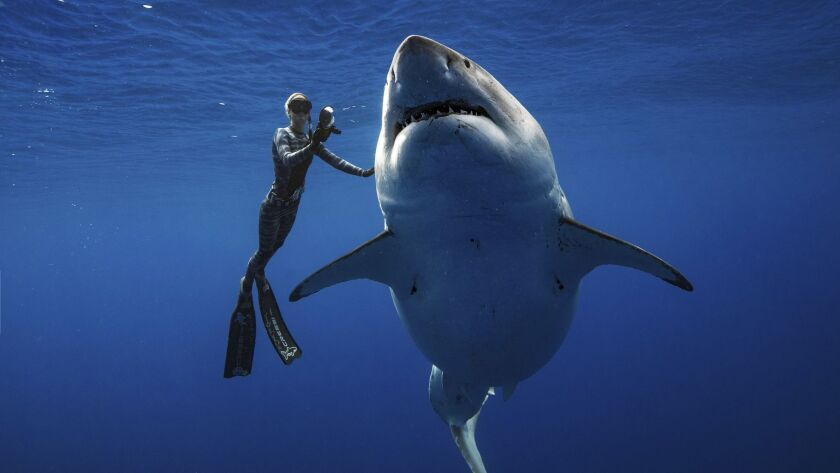 In this Jan. 15, 2019 photo provided by Juan Oliphant, Ocean Ramsey, a shark researcher and advocate