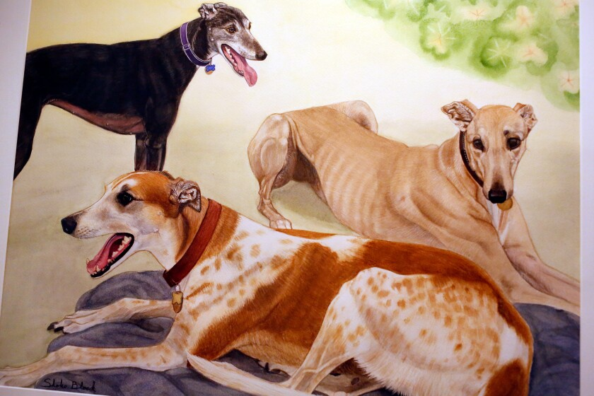 A framed watercolor of three of Tim Lignoul's greyhounds, from left, Kimberly, Grace and Grover, all different colors.