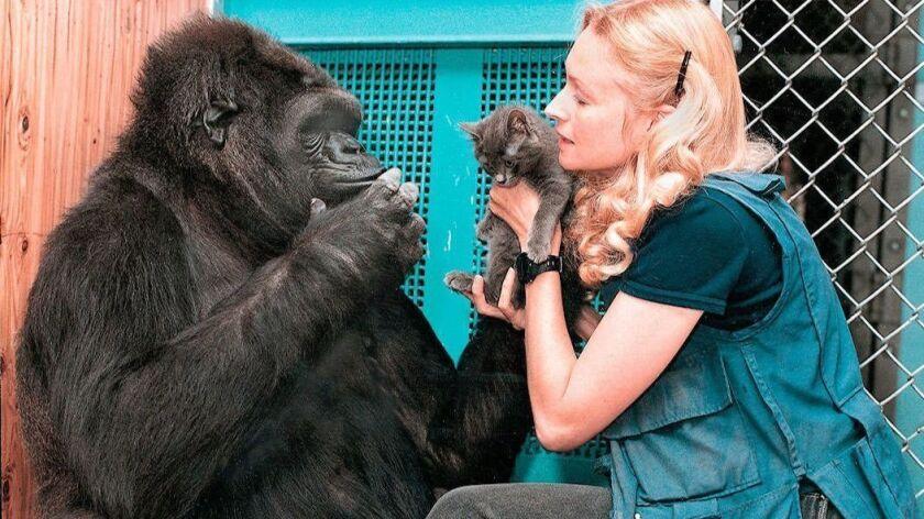 ANIMAL EDUCATION GORILLA CAT LANGUAGE COMMUNICATION CAT RESEARCH